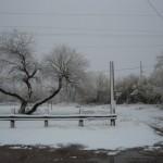 snowy brkfst 2-9-13 - 04