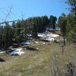 Snow on the hillside - 1