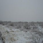 snowy brkfst 2-9-13 - 05