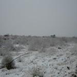 snowy brkfst 2-9-13 - 06
