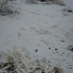 snowy brkfst 2-9-13 - 07